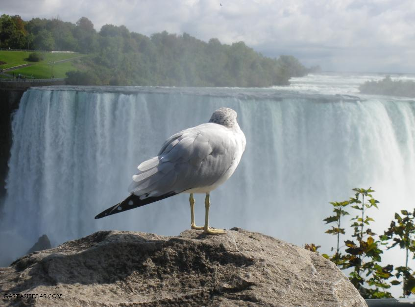 4-Niagara falls-gastasuelas