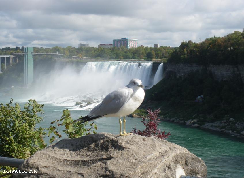 5-USA-Niagara falls-gastasuelas