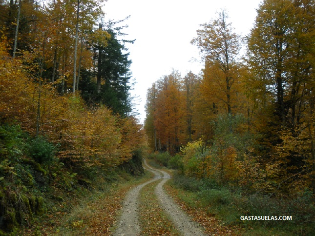 Bosques Irati Navarra