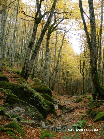 Selva Irati Navarra