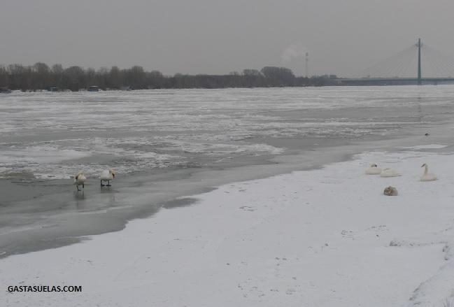 El río Danubio helado a su paso por Viena (Austria)
