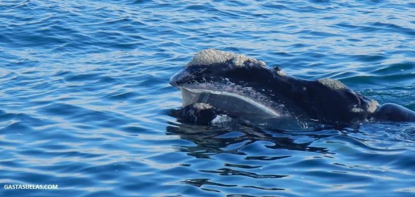 ballenas-sudafrica