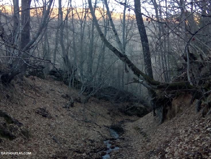 Bosque en los alrededores de La Hiruela (Madrid)