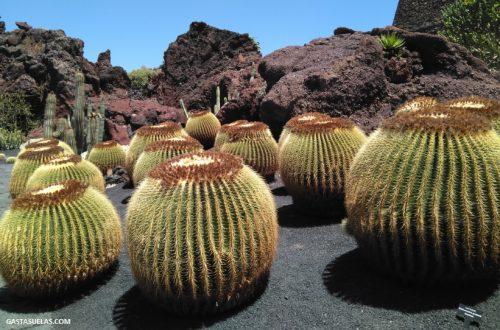 Jardín de Cactus (Lanzarote)