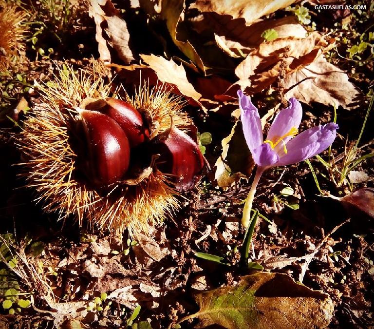 Castañas en el otoño salmantino