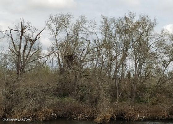 Orilla del río Jarama en la Senda de Titulcia (Parque Regional del Sureste de Madrid)