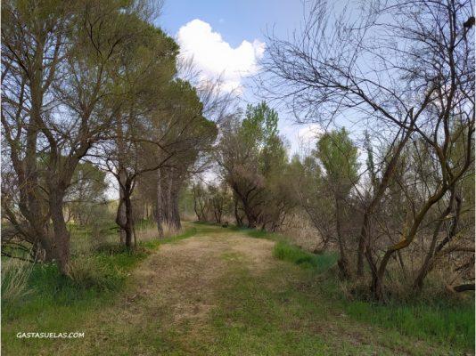 Sendero en el Parque Fluvial de Villamanrique de Tajo (Madrid)